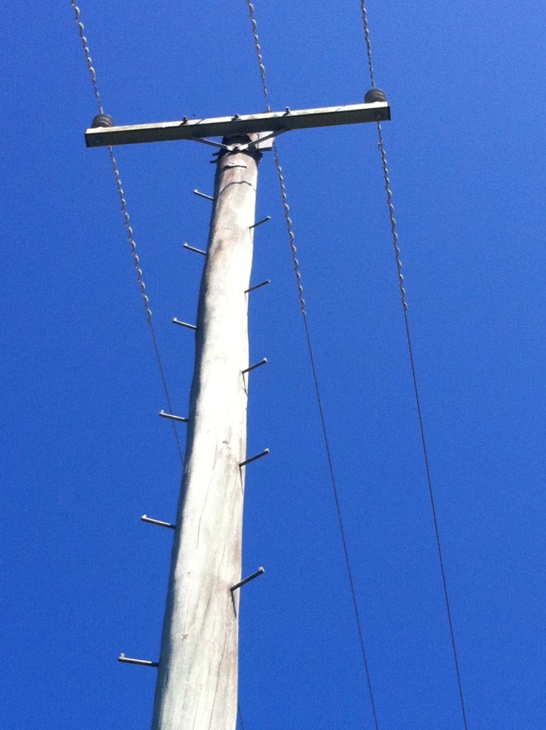 telegraph pole copy