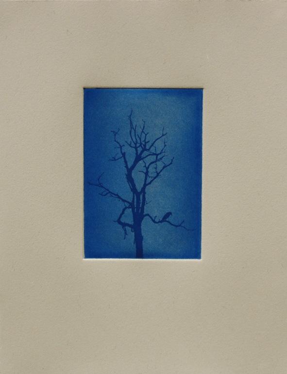 birdtree copy